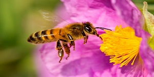 Avance para proteger abejas, autoridades ambientales deberán estudiar efectos adversos de insecticidas